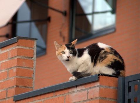Cómo evitar denuncias vecinales por molestias del gato
