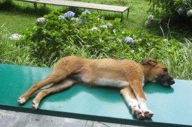 Yoga para perros: una técnica contra el estrés canino