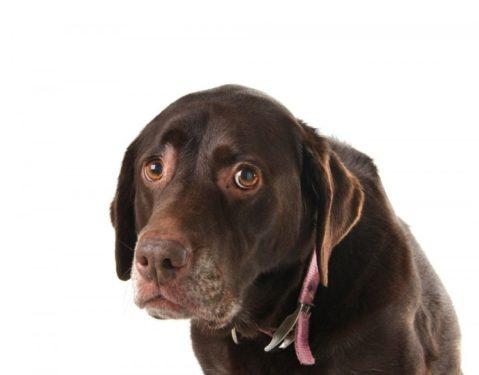 Perros diarreas parásitos