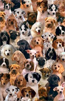 Cuantos años viven los perros