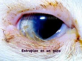 Entropion-3