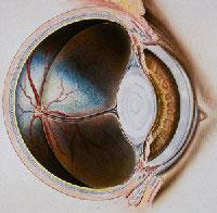 oftalmologia_veterinaria