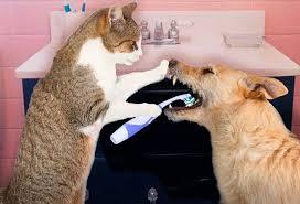 El mal aliento y el sarro dental en perros y gatos