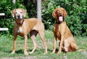 Perro o perra, ¿cuál adopto?