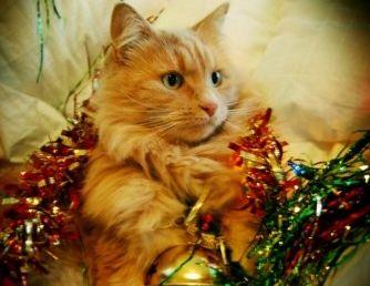 Nueve comidas navideñas perjudiciales para el gato
