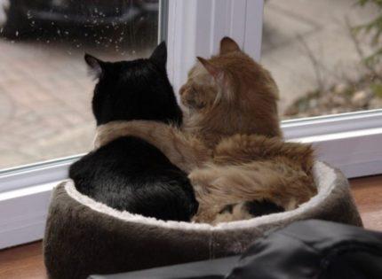 Uno o más gatos en casa, ¿qué es mejor?