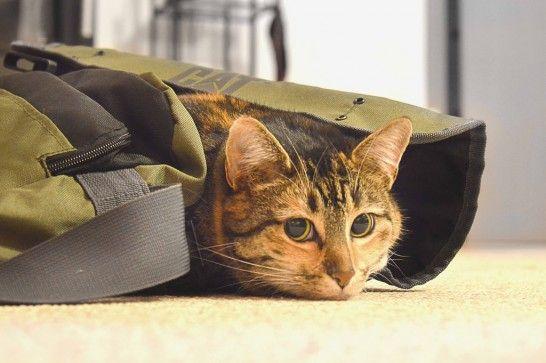 ¿Vives con gatos? Cinco cosas que debes dejar listas antes de viajar esta Navidad