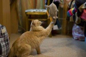 Fabricar juguetes para gatos: cinco ratones baratos