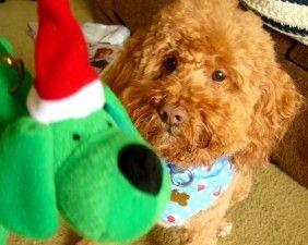 Empachos del perro en Navidad: el peligro de ofrecerle las sobras de comida