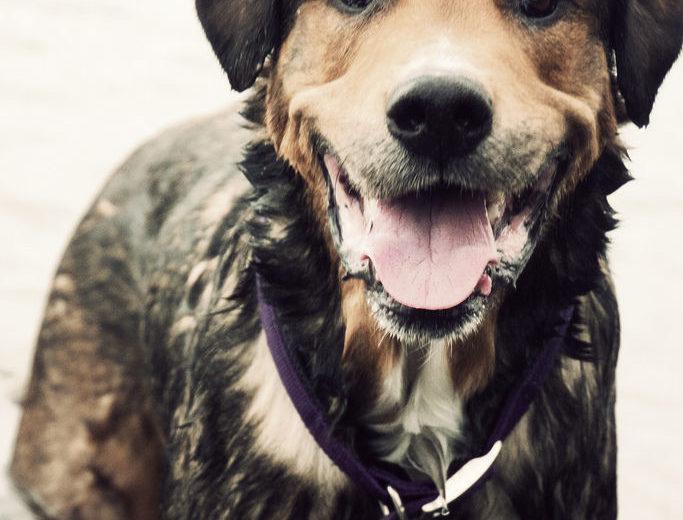 Si está contento, su perro lo sabe por su cara