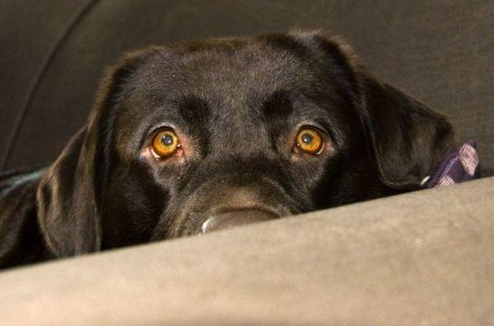 Siete pasos para ayudar al perro con fobia a los ruidos