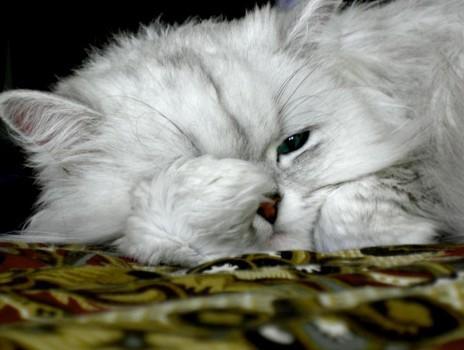 Cómo cuidar el pelo del gato para que brille: tres trucos caseros