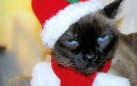 Ya vienen los Reyes… Regalos de Navidad para gatos, por menos de 20 euros