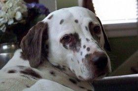 Ayudar a su perro a superar la muerte de otro can