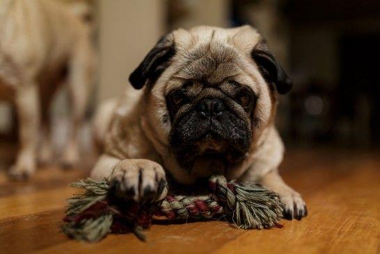 Cinco instintos del perro que hay que satisfacer en casa