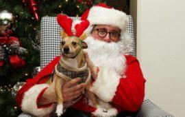 Ya vienen los Reyes… Regalos de Navidad para perros, por debajo de los 20 euros