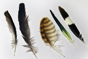 El origen de las plumas