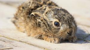 Conejos: Cómo manejar su miedo