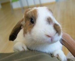 Alimentación de conejos: Los Lácteos