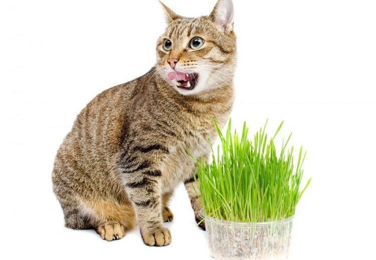 ¿El catnip es peligroso para los gatos?