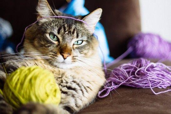 Seis objetos domésticos que deberías mantener lejos de tus gatos