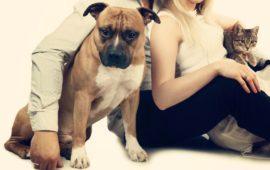 Gente de perros versus gente de gatos, ¿somos diferentes?