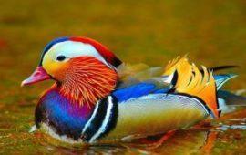 Aves: Un metabolismo único