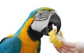 La conversión de un ave a una dieta saludable