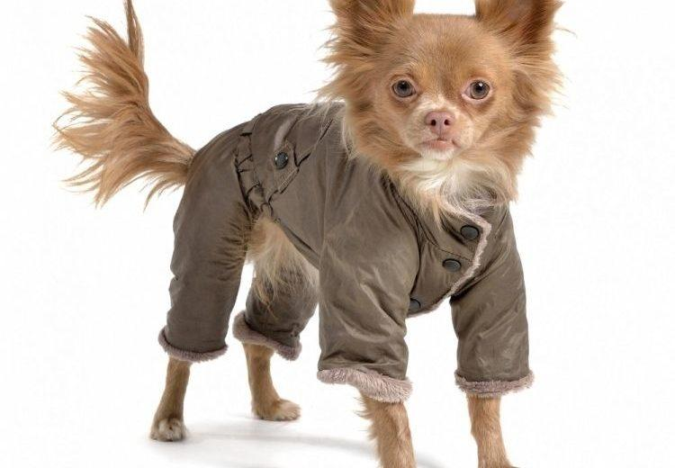 ¿Cómo hacer ropa para perros en casa?