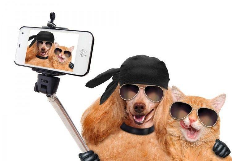 Ocho aplicaciones para perros y gatos viajeros