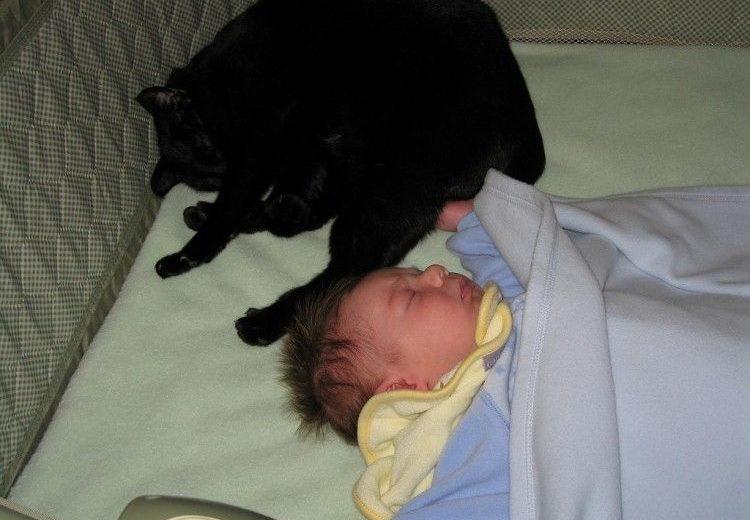 Preparar al gato para la llegada de un bebé en seis pasos