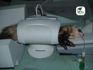 Resonancia magnética en pequeños animales