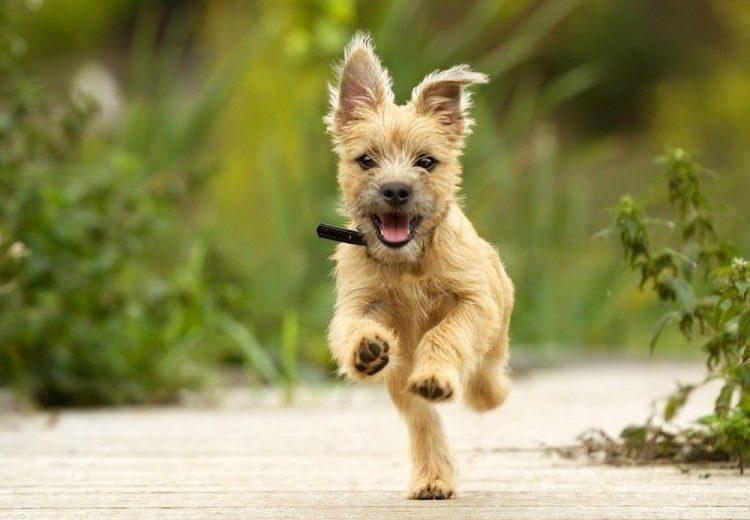 ¡Toby! Seis trucos infalibles para que tu perro venga cuando le llamas