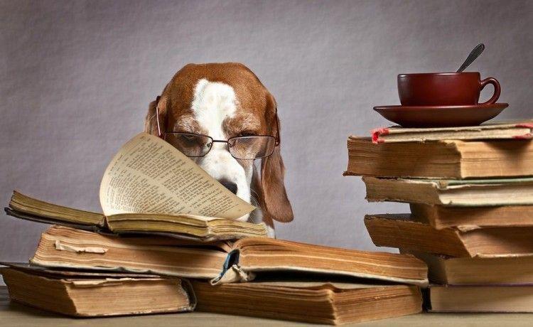 Los doce perros más inteligentes del planeta