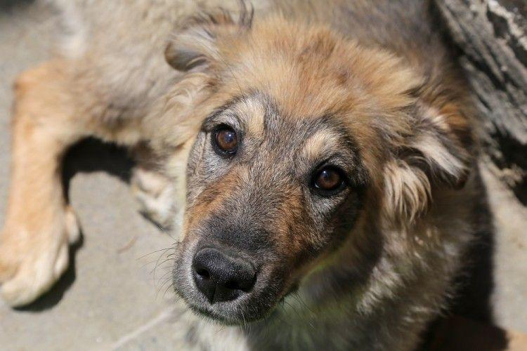 Seis señales de maltrato en perros, y cómo ayudarles