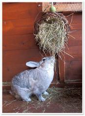 La alimentación de los conejos: El Heno