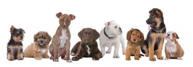 Cachorros de usar y tirar: ¿no éramos los mejores amigos de los animales?