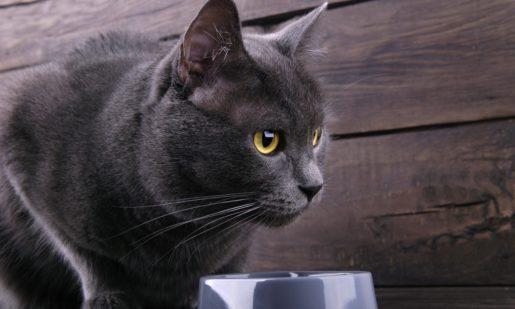Bolas de pelo en gato para evitarlas