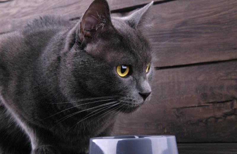 ¿Cómo alimento a mi gato para evitar las bolas de pelo?