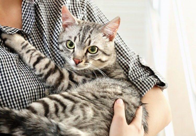 ¿Sabías que los gatos se pierden más que los perros?