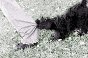 Perros agresivos con las personas: ocho consejos para frenarles
