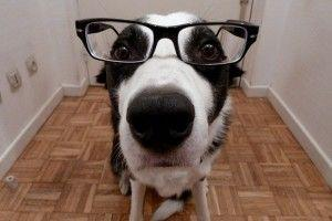 Doctor perro, ¿tengo cáncer?