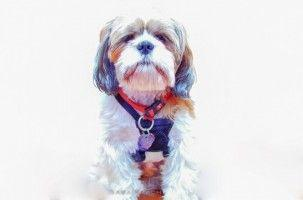 Perros pequeños, pero también peleones