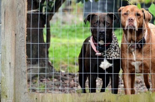El peligro de los collares eléctricos para perros