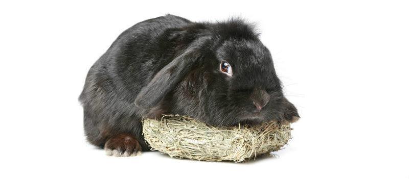 Alimentación para conejos enanos