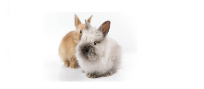 Los cuidados especiales de tu conejo enano
