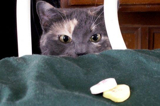 ¿Qué comidas dan alergia a los gatos?
