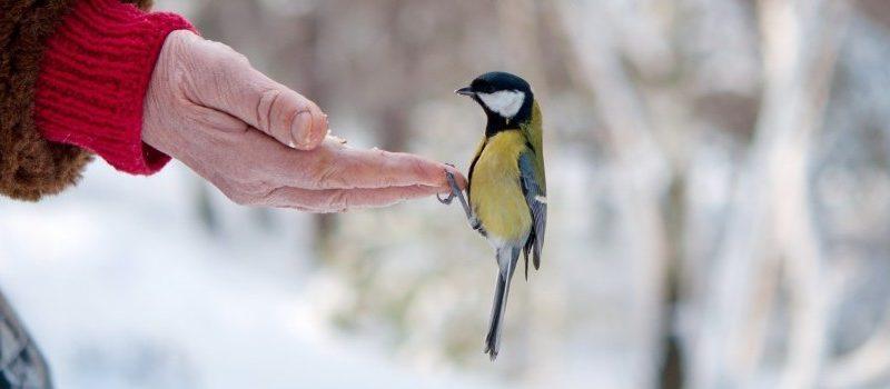 Intoxicación alimentaria en las aves