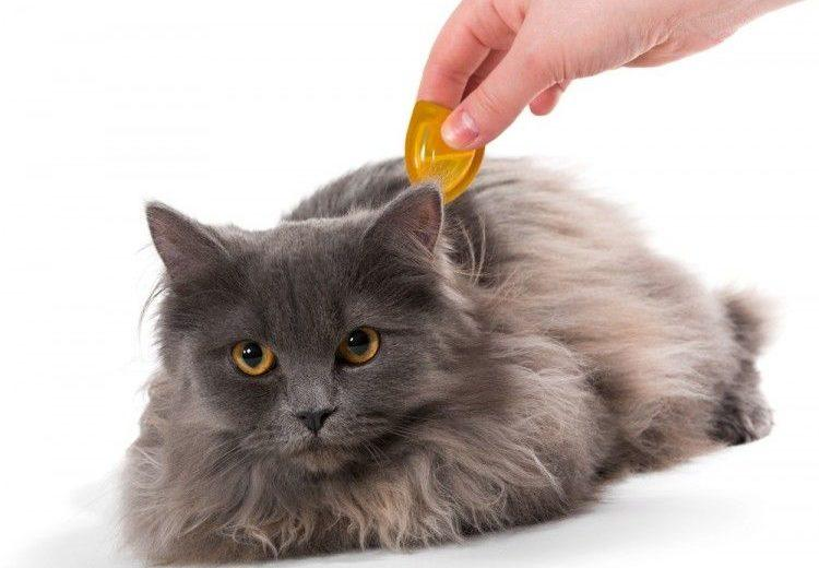 Gatos: seis enfermedades comunes
