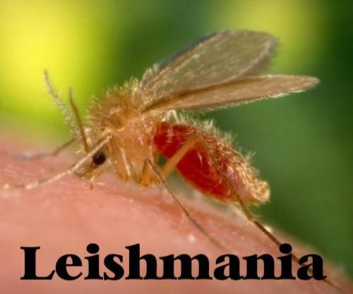 La leishmaniosis: es como predicar en el desierto